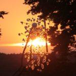 waha 2015 psytrance festival - apus de soare